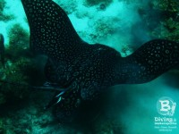 b_diving_cas_abao_beach_curacao_IMG_7184