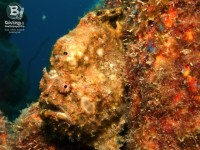 b_diving_cas_abao_beach_curacao_IMG_8615
