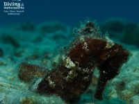 b_diving_cas_abao_curacao_IMG_7510