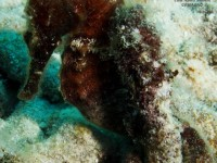 b_diving_cas_abao_curacao_IMG_7516