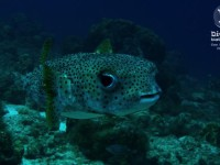 b_diving_cas_abao_curacao_IMG_8685