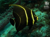 b_diving_cas_abao_curacao_IMG_8695