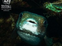 b_diving_cas_abao_curacao_IMG_8698