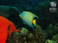 b_diving_curacao_IMG_8173